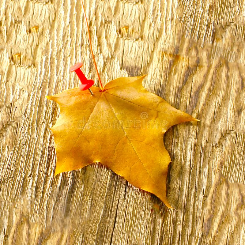 Autumn maple leaves clipart on wooden table.Falling leaves natural background stock photo