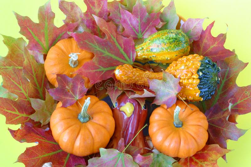 Autumn maple leaves & gourds. royalty free stock images