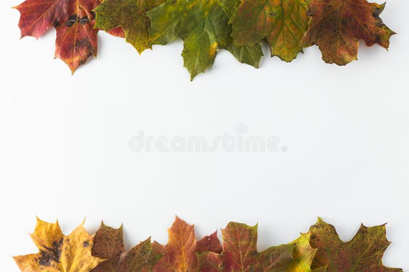 Autumn maple leaves isolated on white with copy space. Colorful composition of fall leaf royalty free stock photos