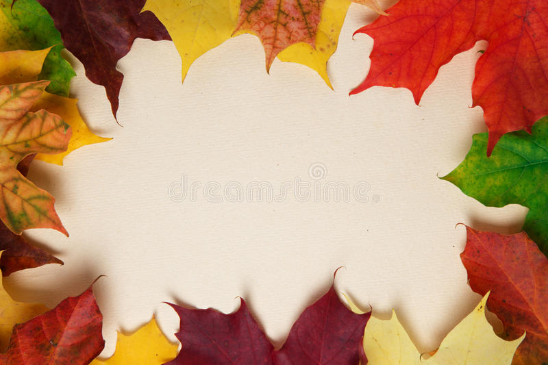 Download Autumn Maple Leaves On Paper Surface Royalty Free Stock Photography - Image: 33946717