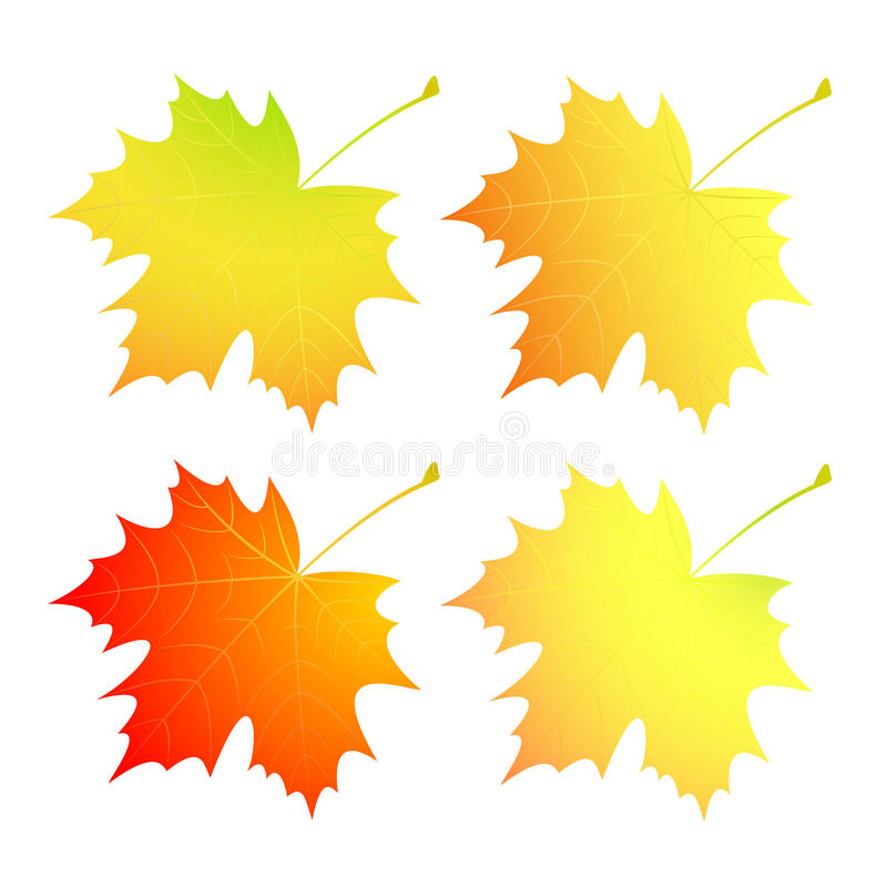 Download Autumn Maple Leaves. A Set. Stock Vector - Illustration of vector, green: 40370911