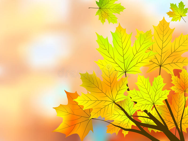 Autumn maple leaves, very shallow focus. vector illustration