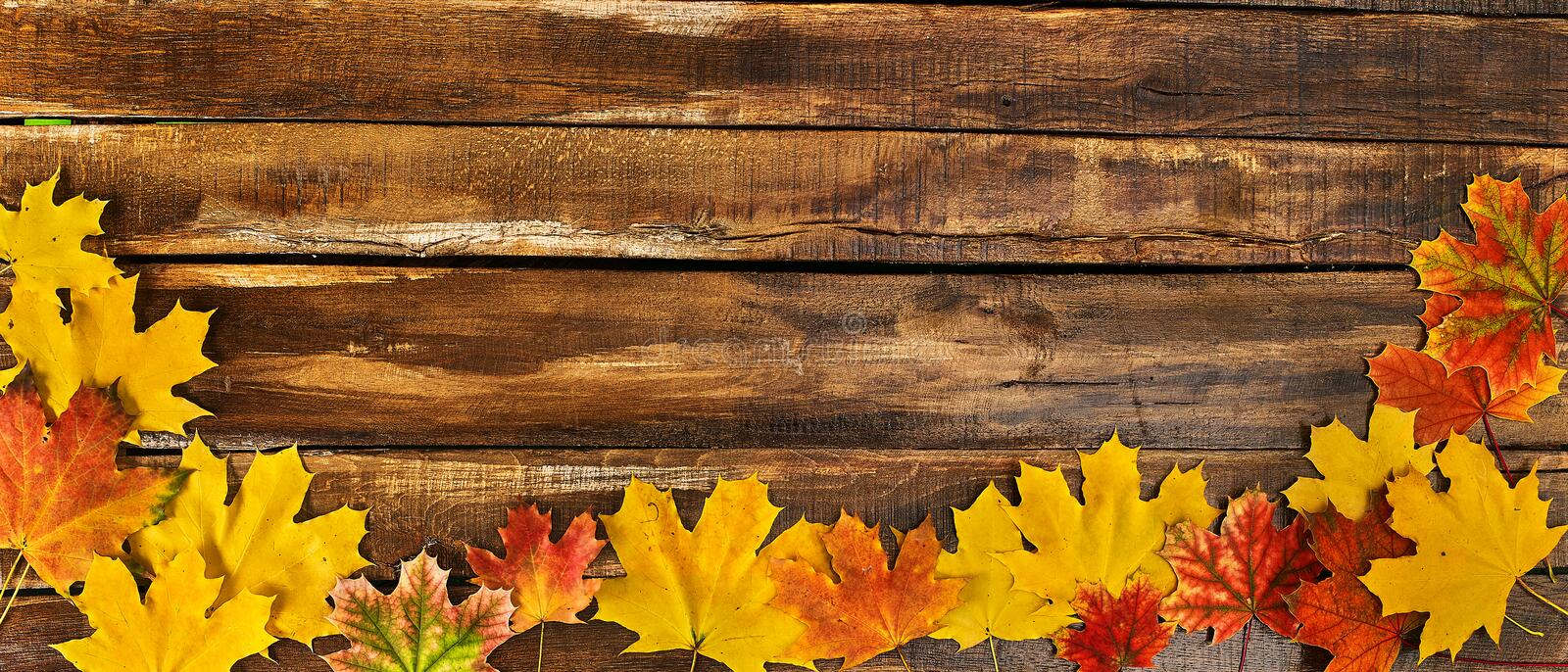 Autumn maple leaves on wooden table. Horizontal frame with foliage royalty free stock photos