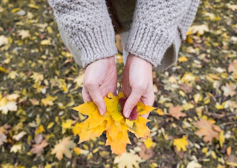 Autumn Maple Leaves in wooman passa il fondo immagine stock libera da diritti