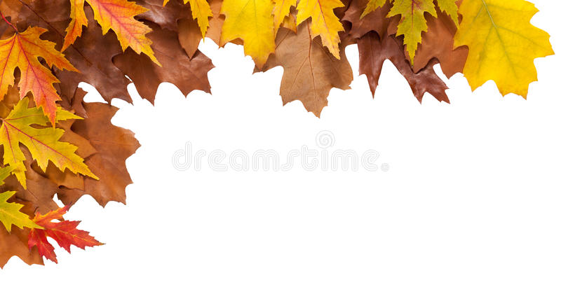 Autumn maple and oak leaves isolated on white background royalty free stock images