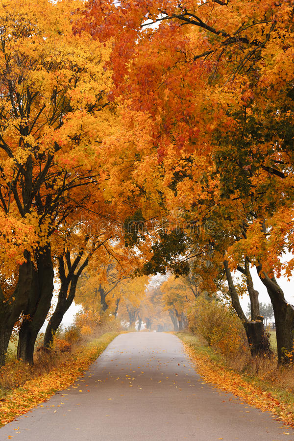 Download Autumn Maple Road. Royalty Free Stock Photography - Image: 27369107