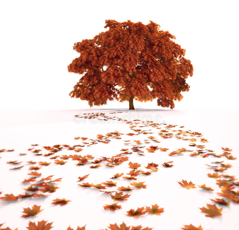 Download Autumn maple tree stock illustration. Image of branch - 29417387
