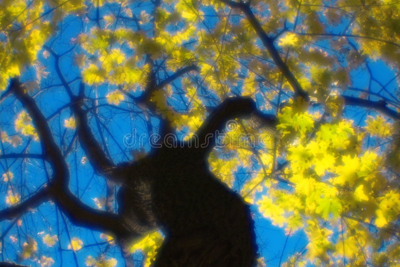 Download Autumn Maple Tree Blurred  Monocle Stock Photo - Image: 7439412