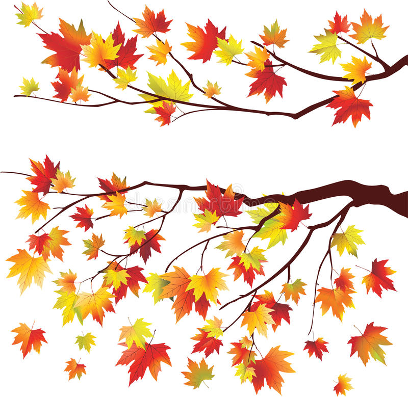 Download Autumn maple tree branches stock vector. Illustration of isolated - 18345880