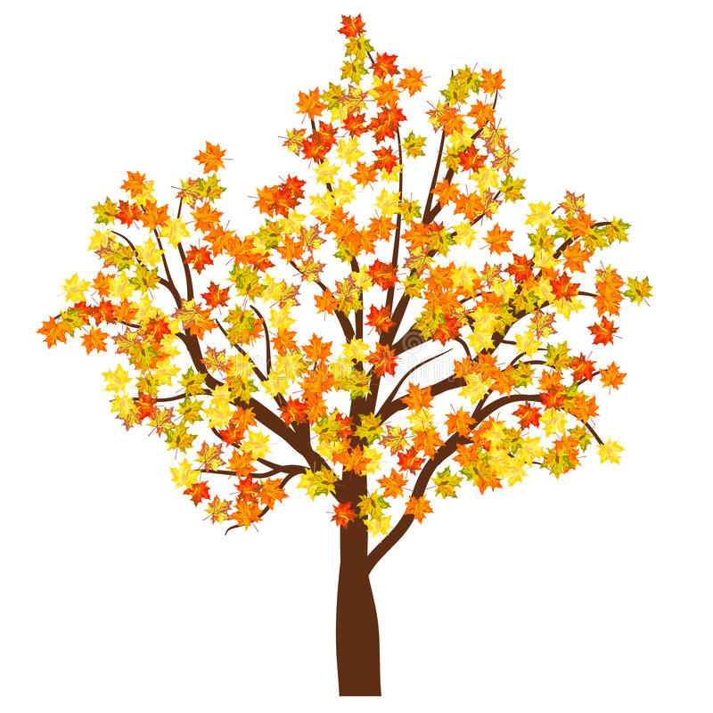 Download Autumn maple tree stock vector. Illustration of branch - 42939890