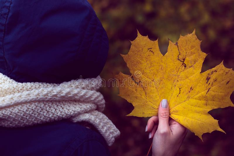 Autumn maple yellow leaf in a girl`s hands stock photo