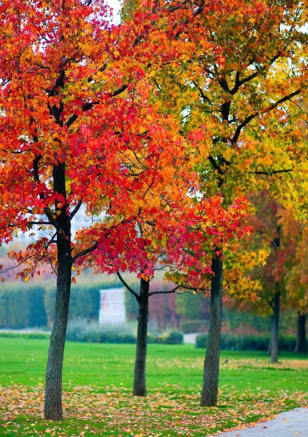 Autumn Maples Stock Photos