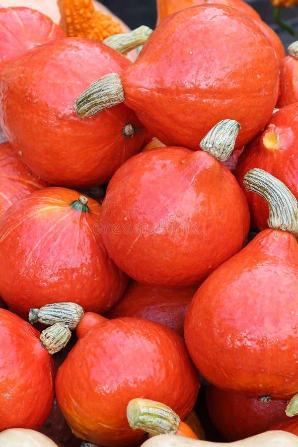 Autumn Market Potirons images libres de droits