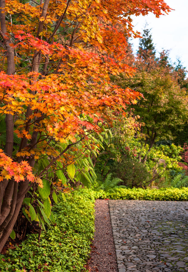 Autumn marple trees in Japanese Garden in Berlin royalty free stock photos