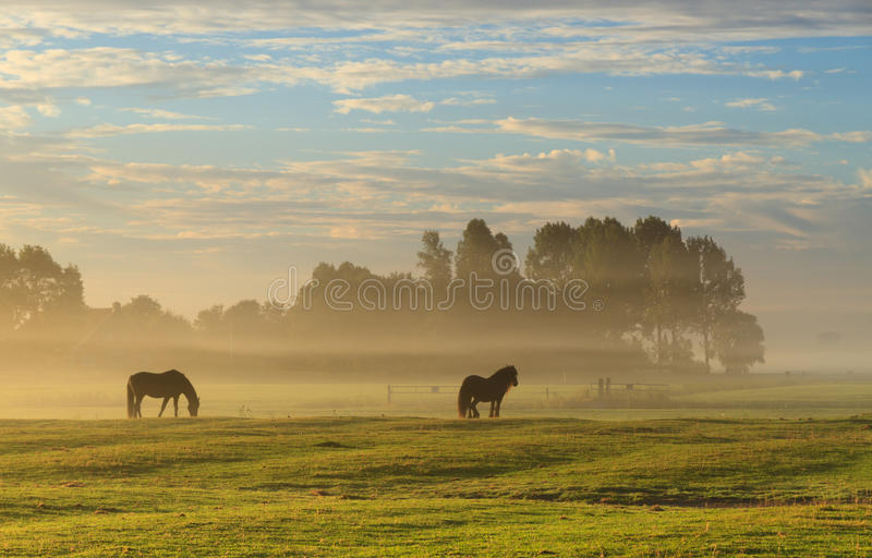 Autumn meadow stock image