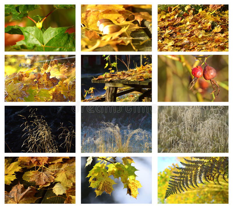 Download Autumn & meadow set stock image. Image of green, acorns - 27088761