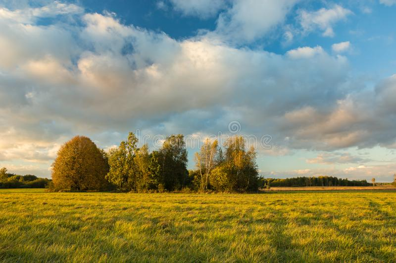 Autumn meadow with trees and warm sunlight. Clouds on the sky stock images