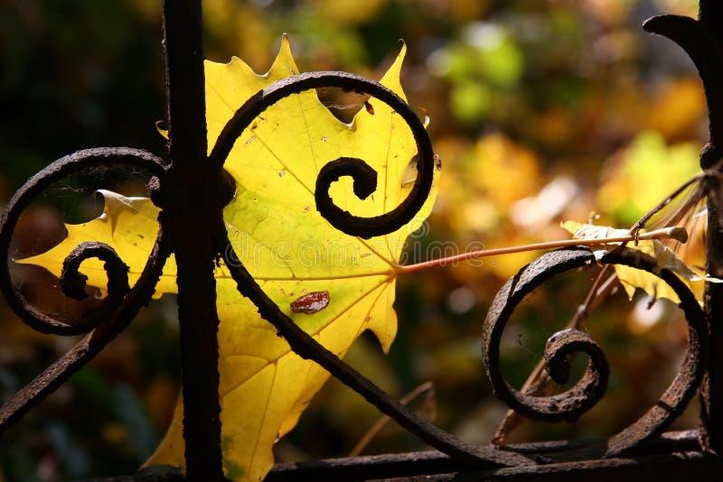 Autumn melancholy royalty free stock photos