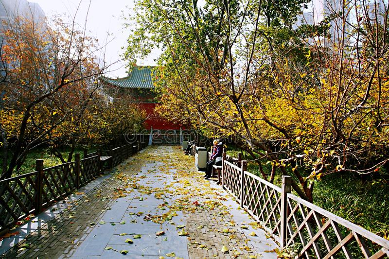 Autumn memory Zhengzhou. Autumn in Zhengzhou does not have the beautiful scenery of maple leaves, but it has a unique autumn color. Westerly wind swept over the royalty free stock photo