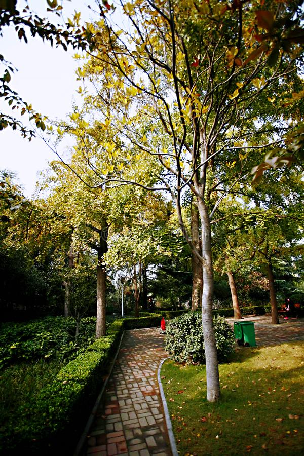 Autumn memory Zhengzhou. Autumn in Zhengzhou does not have the beautiful scenery of maple leaves, but it has a unique autumn color. The westerly wind swept over royalty free stock photos