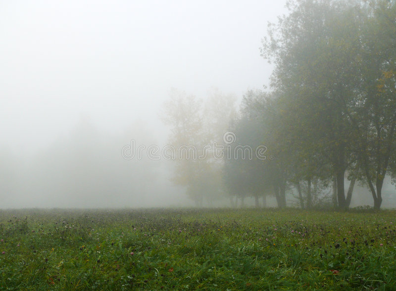 Download Autumn mist stock photo. Image of tree, morning, nature - 7095032