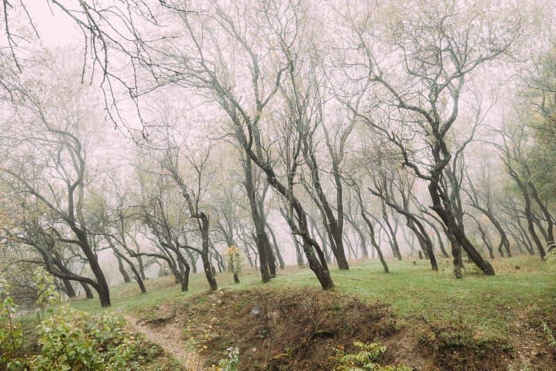 Autumn Misty Deciduous Forest Landscape fotografia de stock royalty free