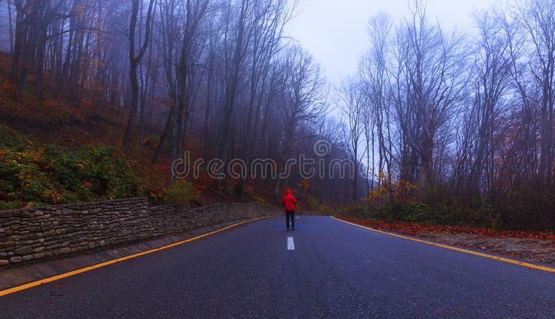 Autumn in the misty forest royalty free stock photography