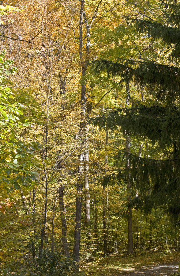 Download Autumn in a mixed forest stock image. Image of leaf, path - 11402607