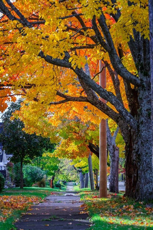 Free Autumn, Moncton, New Brunswick, Canada Stock Photos - 129783363