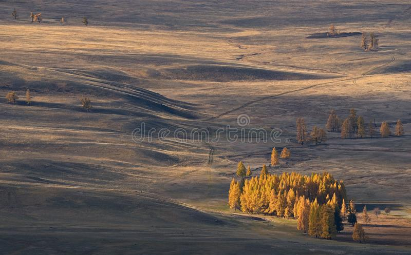 Autumn Mongolian landscape: high-altitude steppe with small groves of larch, illuminated by the sun. Roads in the steppe. Western stock photography