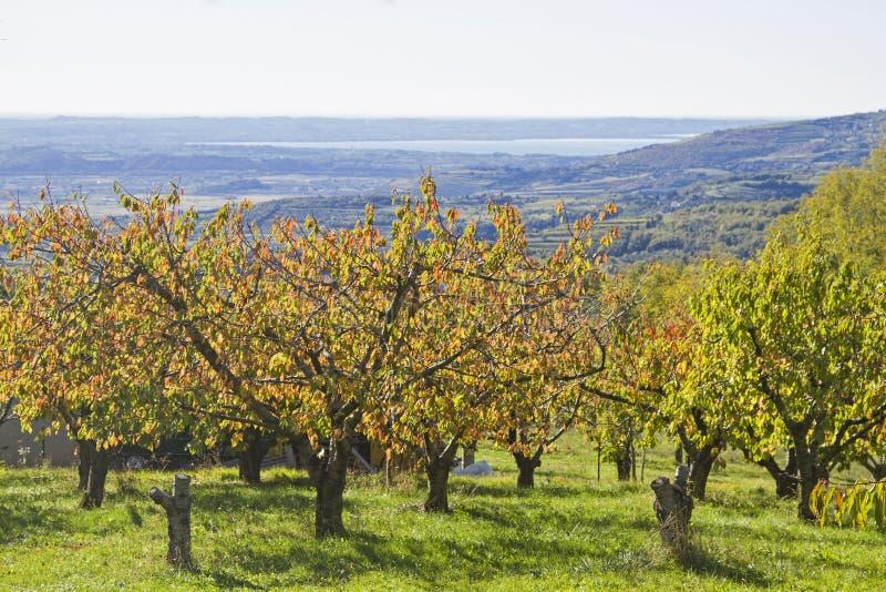 Autumn in the Monti Lessini royalty free stock photos