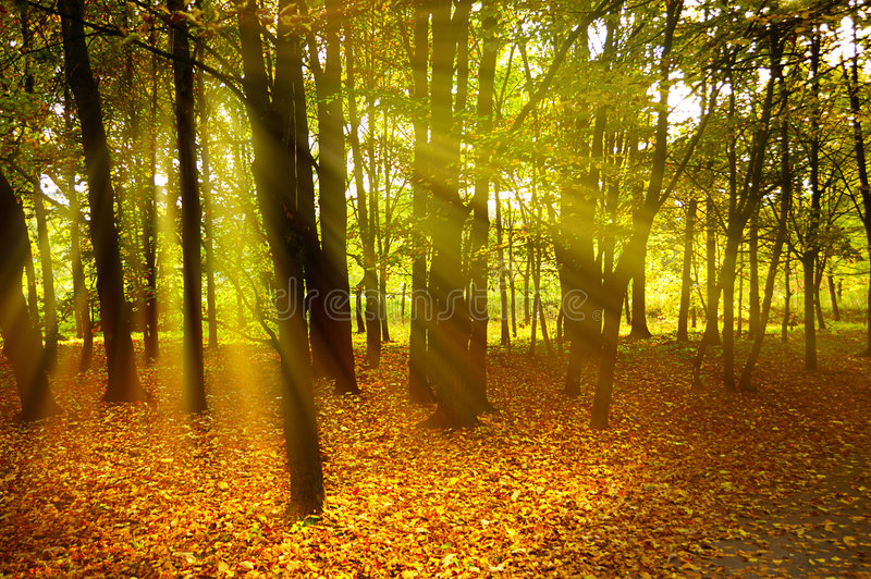 Autumn mood. Detail of a wood in autumn colors with rays of sun falling through royalty free stock image