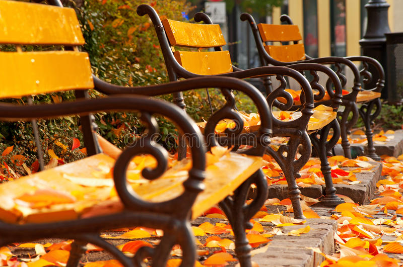 Autumn mood with benches royalty free stock photo