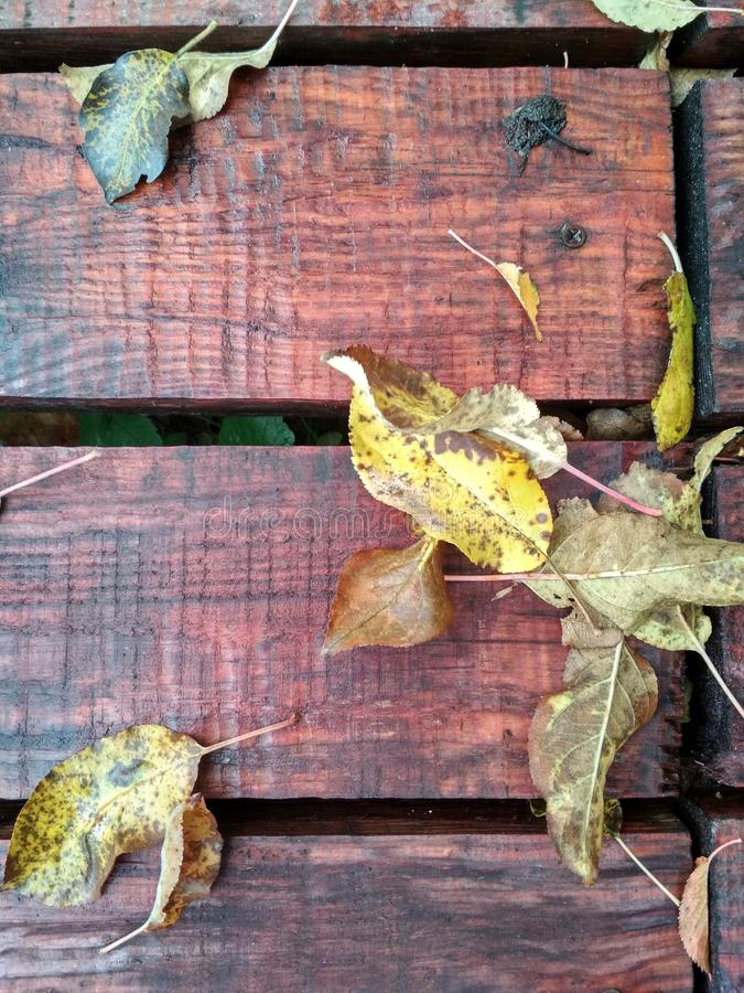Yellow leaves on the bench royalty free stock image