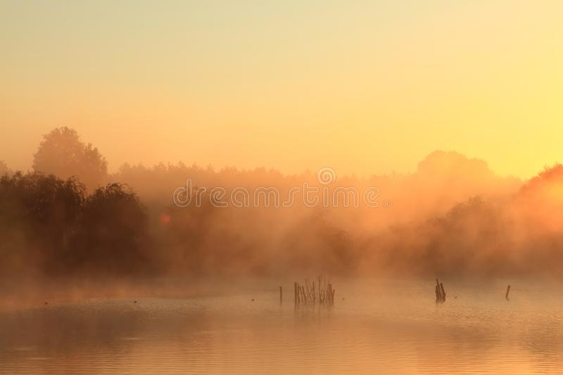 Autumn morning. And trees in a lake stock photos