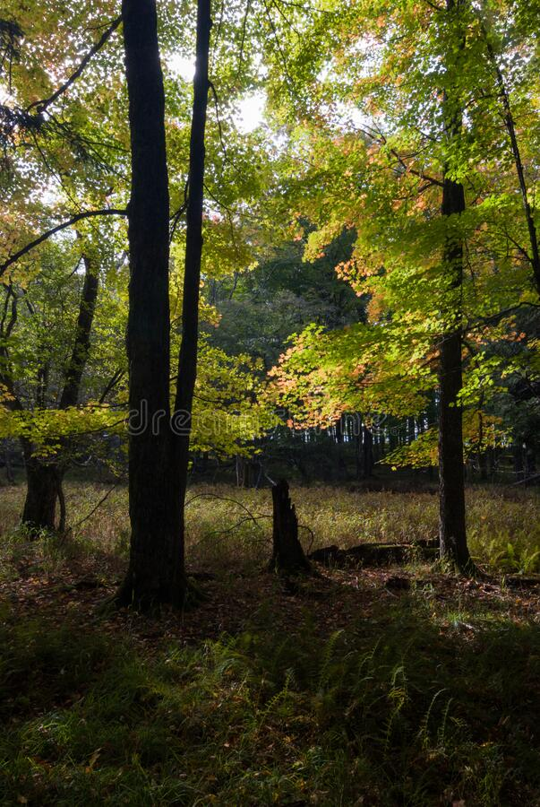 Autumn Morning, Canaan Valley State Park, West Virginia immagine stock libera da diritti