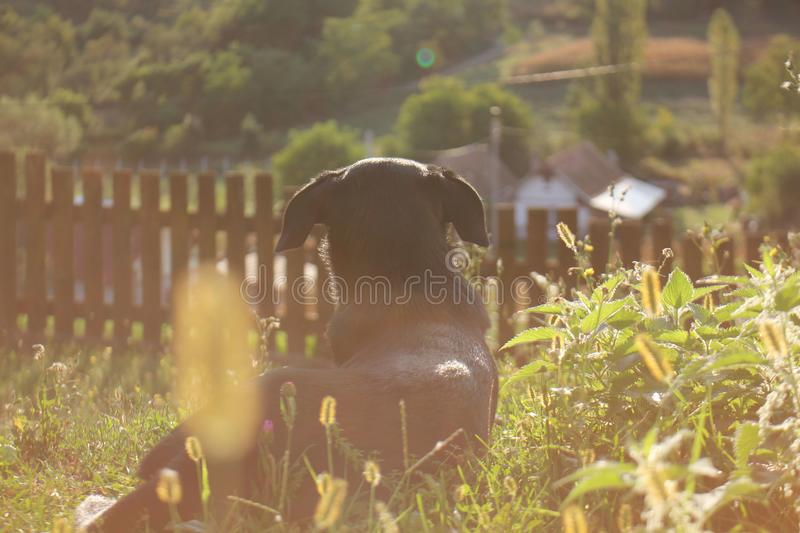 An autumn morning of a dog stock image