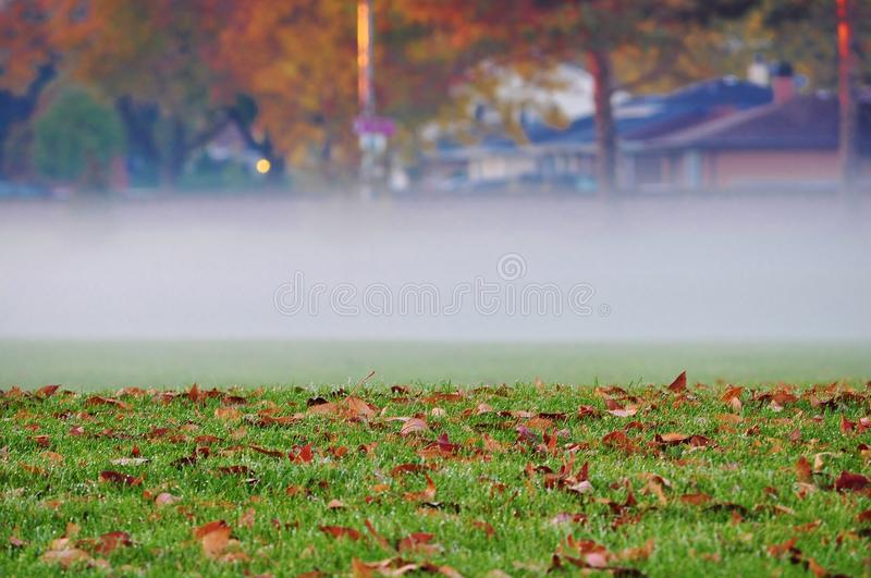 Autumn morning fog in the city. A strip of dense fog hovering over a lawn covered with fallen leaves royalty free stock photo