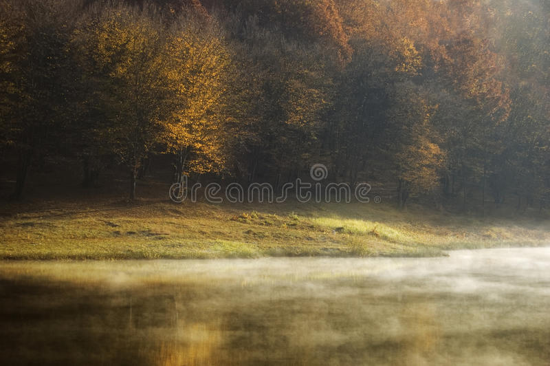 Autumn morning at the lake near a forest with fog royalty free stock image
