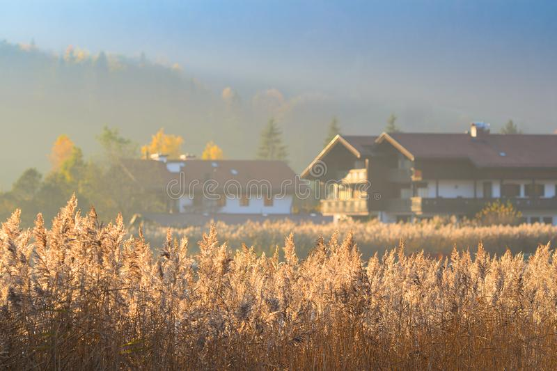 Autumn morning landscape with fog over lake stock photos