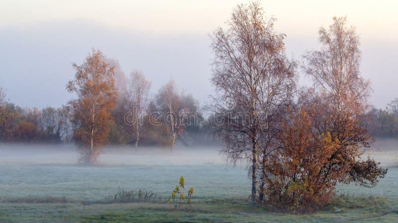 Foggy frosty autumn morning. royalty free stock photography