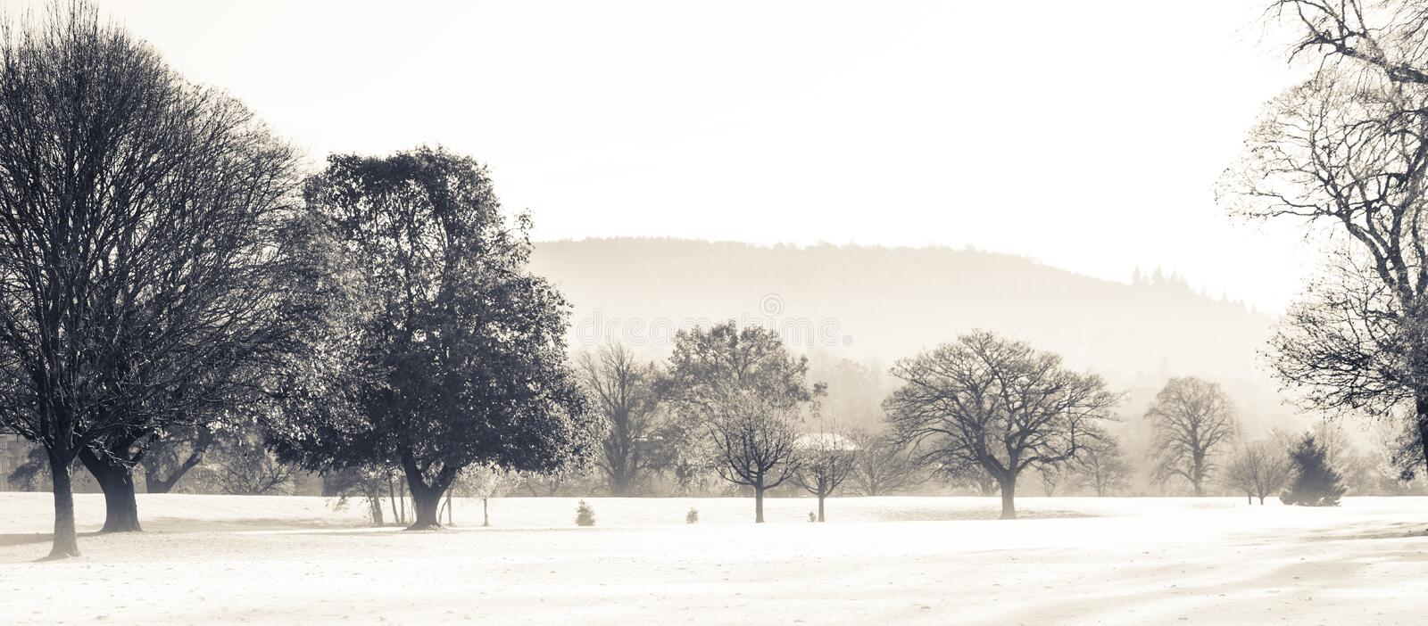 Autumn morning landscape with fog, trees, frost and sunlight. Foggy frosty autumn morning. Copy space. Monochrome royalty free stock image