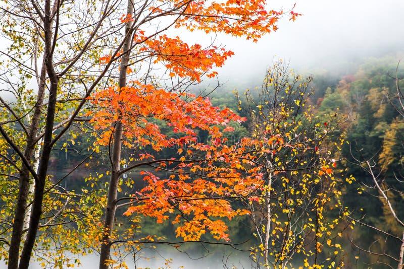 Autumn morning with near lake royalty free stock photo