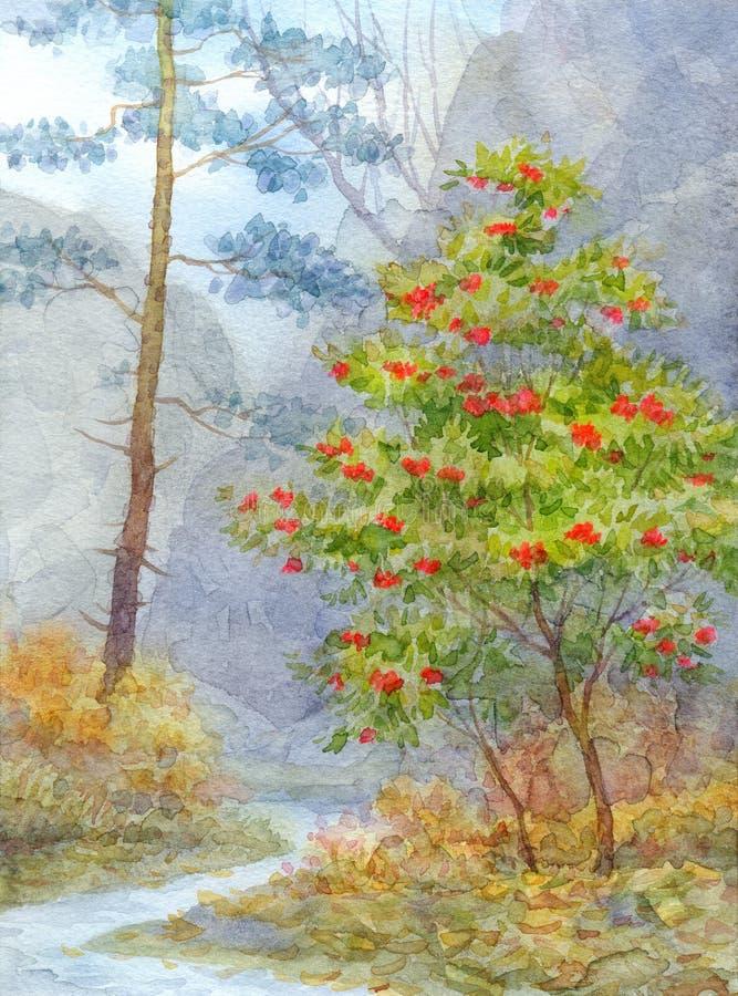autumn mostu park mała akwarela krajobrazu Lasowy halny strumyk biega między sosną ilustracji