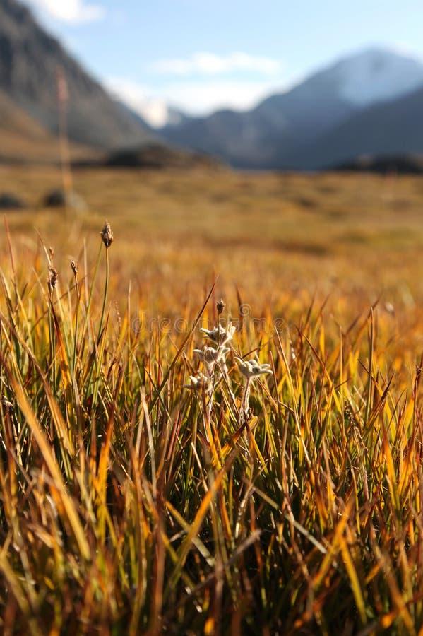 Autumn mountain meadow royalty free stock image
