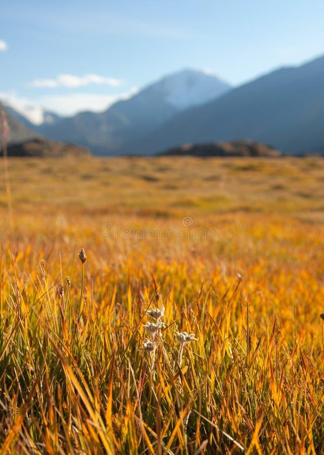 Autumn mountain meadow stock photography