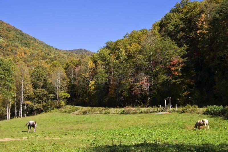 Autumn Mountain Scene stock images