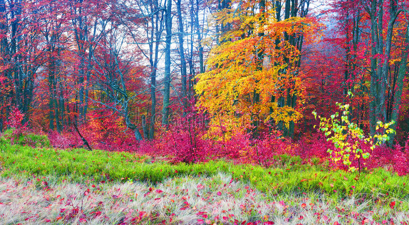 Autumn in the mountains of Europe royalty free stock images