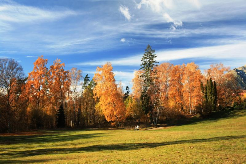 Autumn in mountains royalty free stock image
