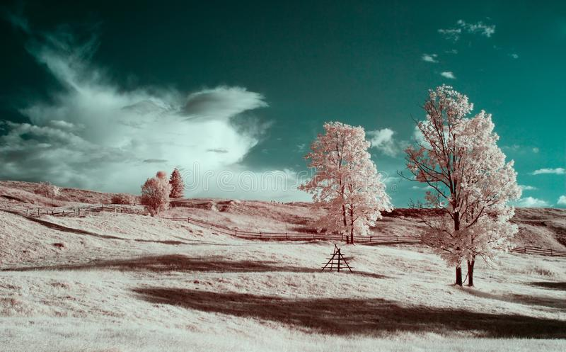 Autumn in the mountains. Infrared photography. beautiful lonely tree in the sky many clouds stock image